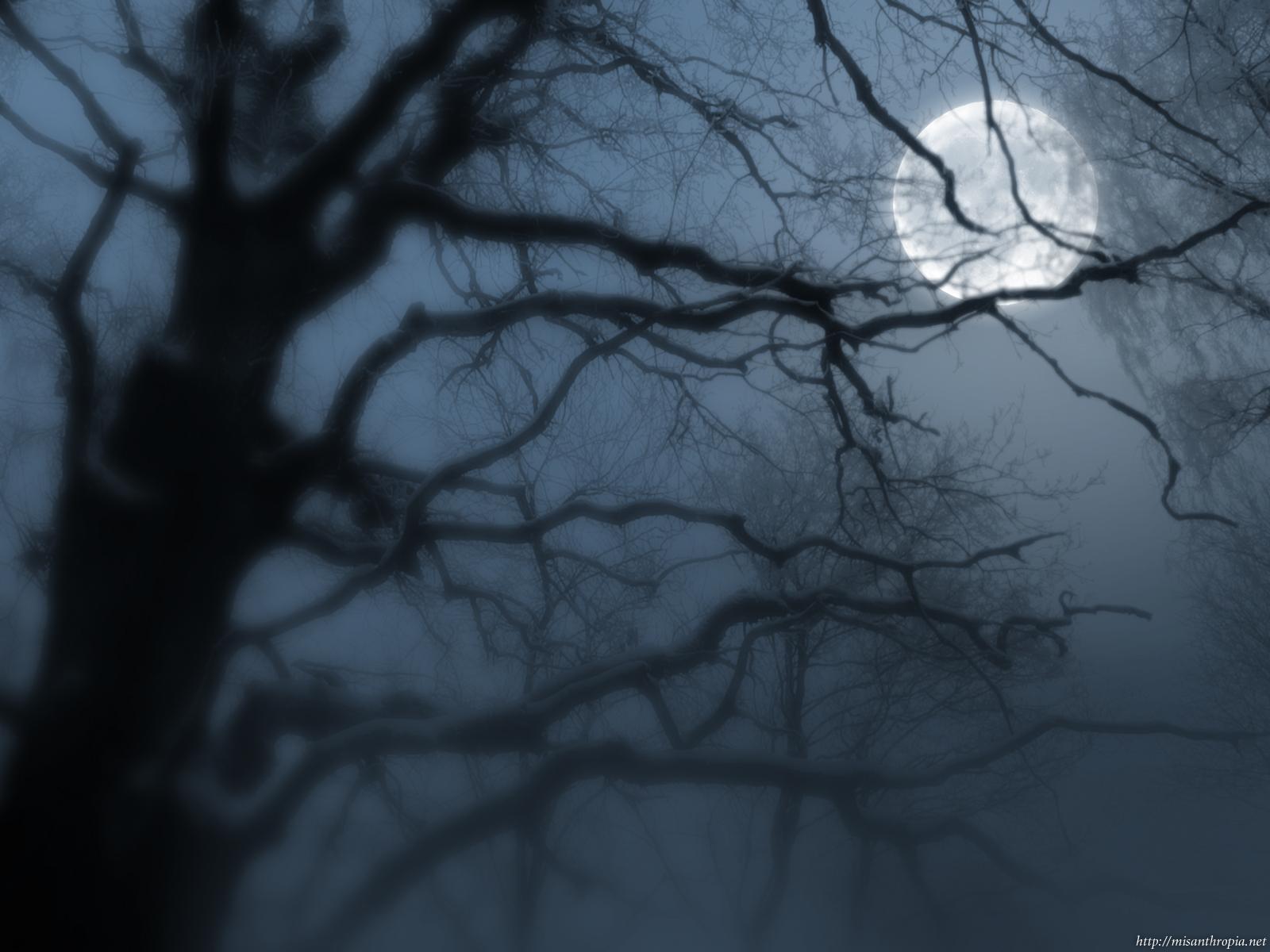 Wallpaper : Moon Tree